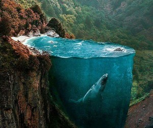 whale, nature, and art image