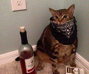 alcohol, cat, and cigarettes image