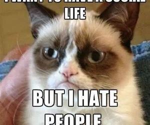 grumpy cat, funny, and cat image
