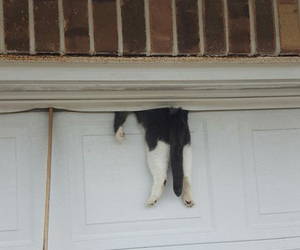 cat, funny, and garage image