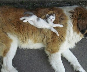 cats, cute, and dogs image
