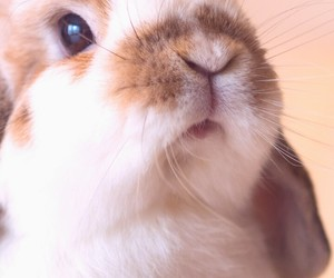 wallpaper, rabbit, and animal image