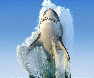 ocean and big sharks image