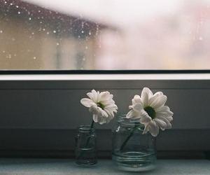 analog, daisy, and photography image