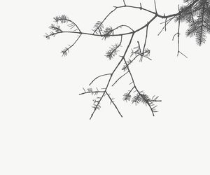 black and white, branch, and branches image
