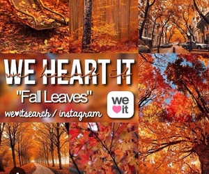 fall, fall leaves, and leaves image