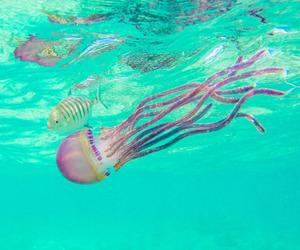 beautiful, jellyfish, and water image
