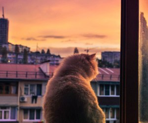 cat, cats, and dawn image