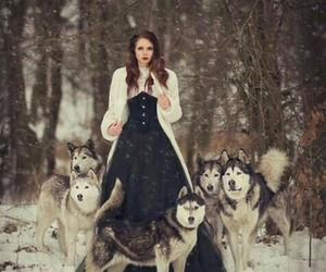 wolf, dog, and fantasy image