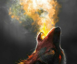 wolf, fire, and animal image