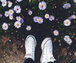 flowers, converse, and shoes image