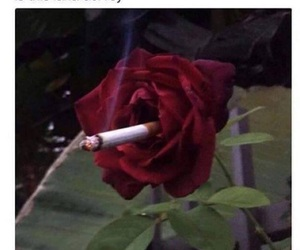 lana del rey, rose, and funny image