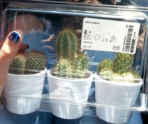 cactus, grunge, and aesthetic image