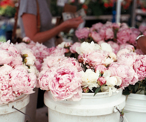 city, peonies, and farmers market image