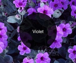 flower and violet image