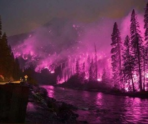 fire, forest, and pink image