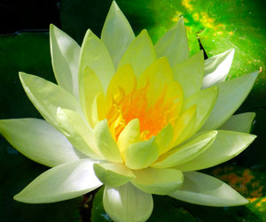 etsy, water lily, and spiritual gift image