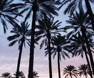 palm trees, beach, and sky image