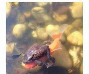 fish, funny, and frog image