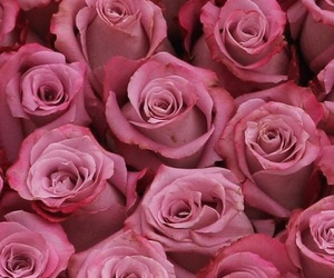 beauty, bouquet, and boutique image