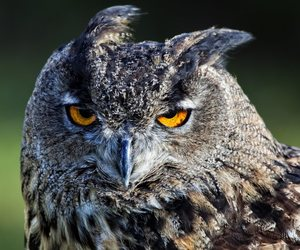 birds, owls, and bored image