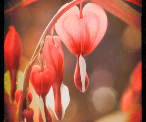 pink heart, wall decor, and flower art image
