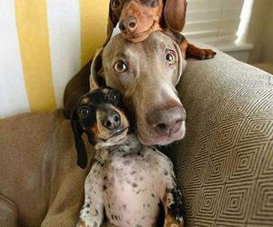 Animales, hogar, and perro image