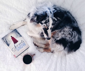 aussie, book, and books image