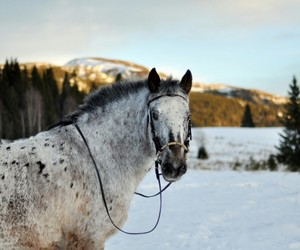 bridle, cold, and forest image