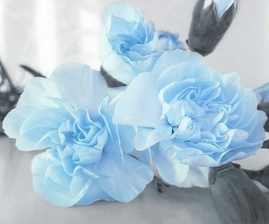 baby blue, roses, and floral image
