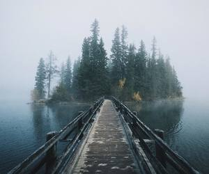 adventure, forest, and travel image
