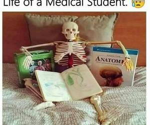 biology, life, and medical image