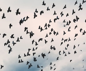 birds and sky image