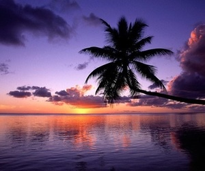 sunset, palm trees, and beach image