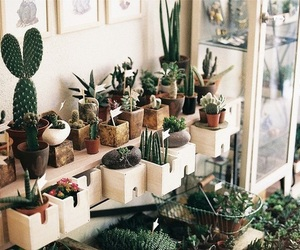 cacti, flowers, and plants image
