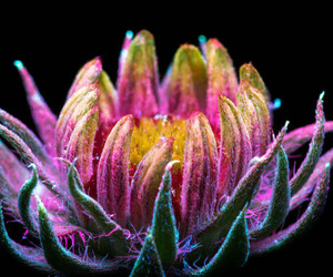flowers, naturaleza, and ultraviolet image