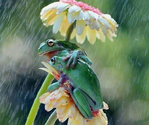 couple and frogs image
