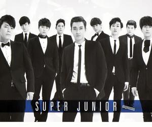 super junior image
