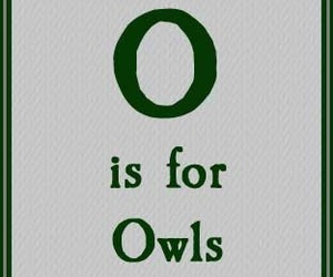 harry potter and owls image
