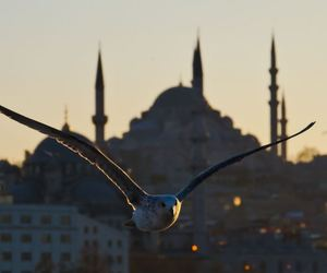 bird, blue mosque, and islam image