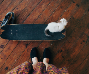 cat, skate, and photography image