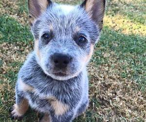 -puppy image