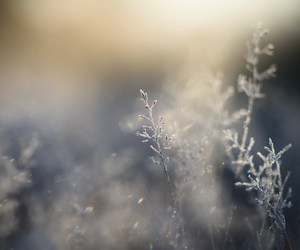 bokeh, close up, and cold image