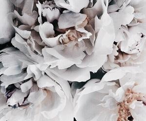 background, vintage, and flower image