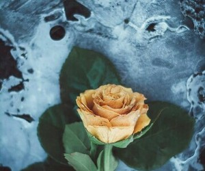 ice and rose image