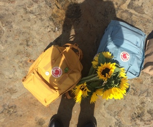 yellow, blue, and sunflower image