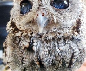 owl, eyes, and animal image