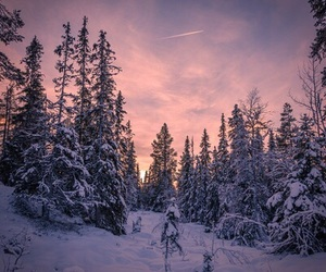 snow, tree, and forest image