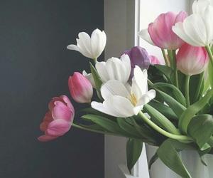 tulip and توليب image
