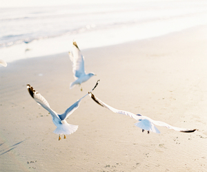 beach, bird, and sea image